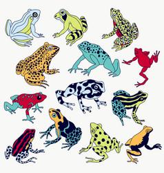Frogs set vector