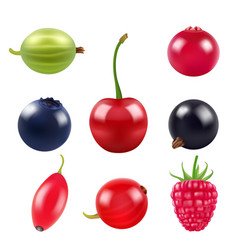 realistic pictures berries various fresh vector image