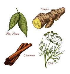 sketch icons of spice and herb seasonings vector image