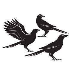 crow vector image vector image
