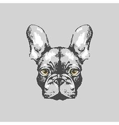 Hand drawn french bulldog portrait vector image vector image