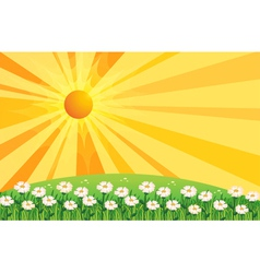 A garden of white flowers above the hills vector image vector image