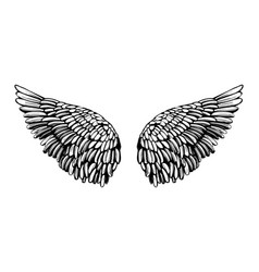 angel wings bird wings collection cartoon hand vector image