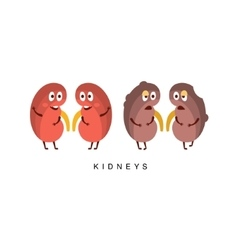 Healthy vs Unhealthy Kidneys Infographic vector