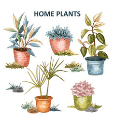 home plant 02 vector image