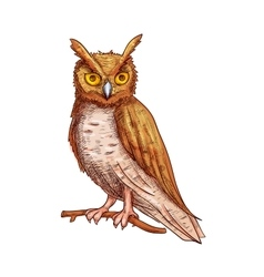 Night owl sketch icon vector