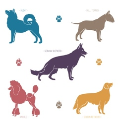Set of different dog breeds silhouettes vector image