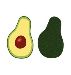 Tropical green fruit avocado icon vector