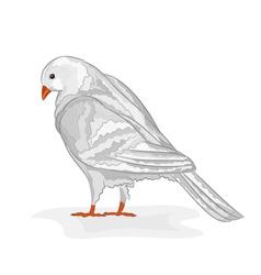 White pigeon White dove symbol peace vector