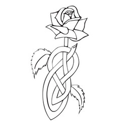 Celtic knotted rose vector