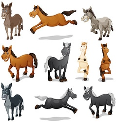 Horses and donkeys in different poses vector