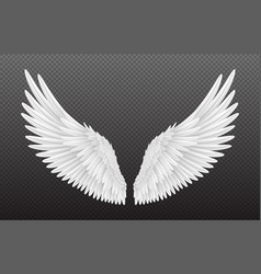 Pair beautiful white angel wings isolated vector