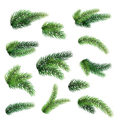 set fir branches isolated on white background vector image