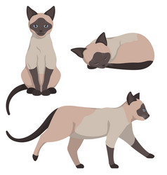 Siamese cat in different poses vector