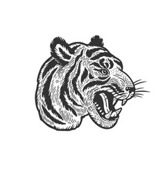 tiger head tattoo sketch vector image