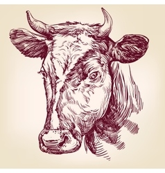cow hand drawn llustration vector image