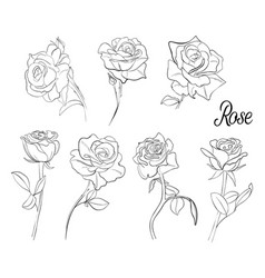a set of sketches of roses a variety of flowers vector image