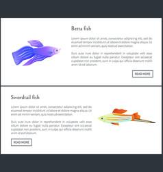 Betta and swirdtail fish set vector