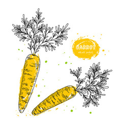 carrot hand drawn in the style vector image