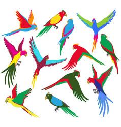 Colorful jungle parrot set vector