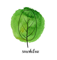 leaf of smoketree vector image
