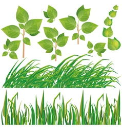 Set of green leaves and grass vector image