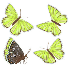 set yellow butterflies lycaenidae isolated on vector image