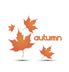autumn leaves leaf background fall white yellow vector image