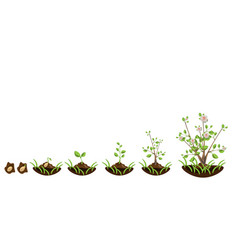growth trees with flowers vector image