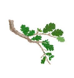 Oak-branch vector