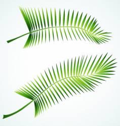 Palmed branch vector