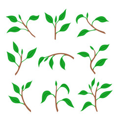 set spring branches with leaves vector image