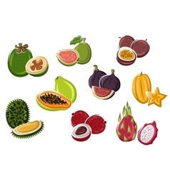Tropical fresh fruits in cartoon style vector
