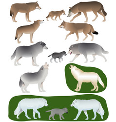 Wolves and wolf-cubs vector