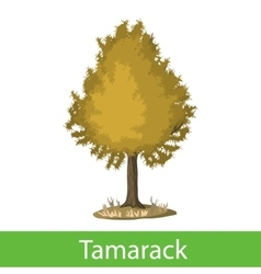 Tamarack cartoon tree vector image vector image