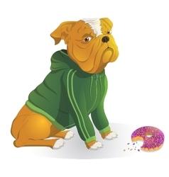 Bulldog wearing a jacket dinner donut vector image vector image