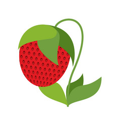 strawberry on bush isolated red berries on white vector image vector image