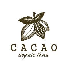 Cacao fruit organic farm logo label design vector