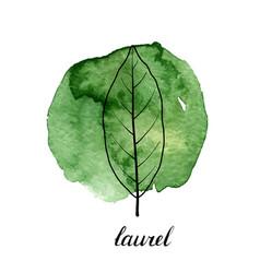 Leaf laurel tree vector