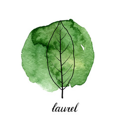 leaf of laurel tree vector image