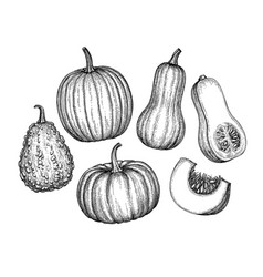 set pumpkins vector image