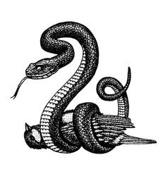 Viper snake serpent cobra and python anaconda vector