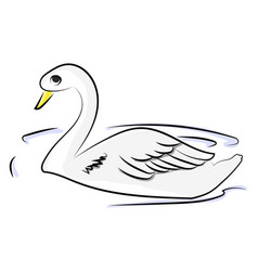 white swan in water on white background vector image