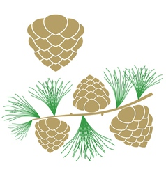 Pine cone Larch tree vector image