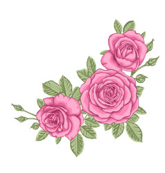 Beautiful bouquet with three pink roses and vector