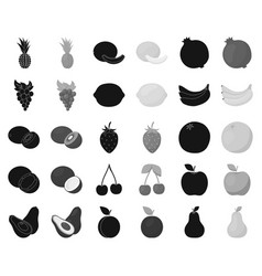 Different fruits blackmonochrome icons in set vector