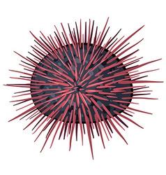 Seaurchin vector
