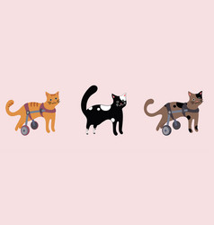 set of disabled cats in wheelchair vector image