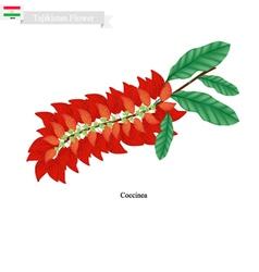 Warszewiczia Coccinea Famous Flower of Tajikista vector image