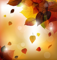 Autumn leafs background vector image vector image